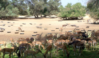 Lal Suhanra National Park